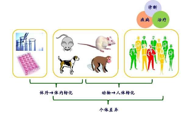 药物代谢动力学研究平台 (更新版)_页面_1.jpg
